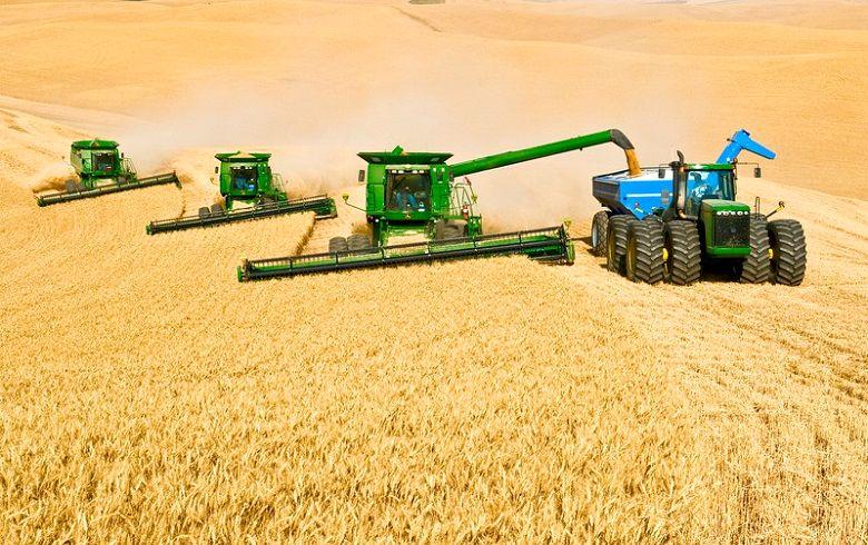امسال ۱۴ میلیون تن گندم در کشور تولید میشود