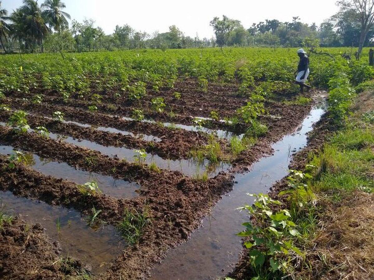 استفاده از هوش مصنوعی، انقلابی بزرگ در صنعت کشاورزی است