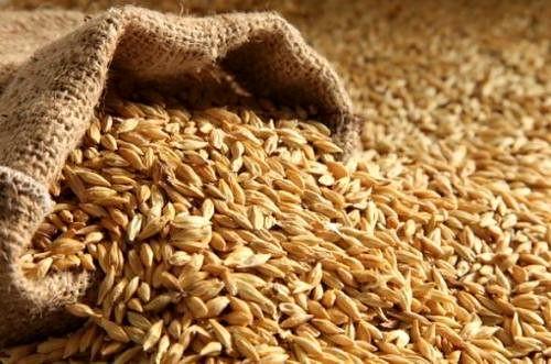 میزان تولید گندم امسال چقدر است؟