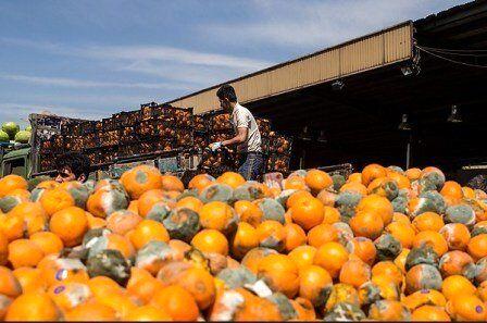 قیمت خرید پرتقال شب عید اعلام شد