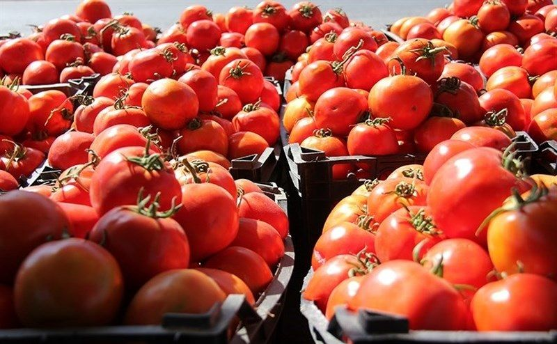 گوجه ۴۲درصد ارزان شد، ربگوجه ۱۵درصد گران؛ ناظران بازار در خواب / جدول قیمت ۲۴ کالای خوراکی