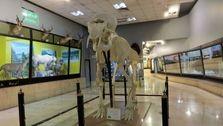 از چه موزه هایی رایگان بازدید کنیم؟