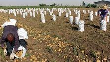 خودکفایی در کشاورزی با اصلاح ساختار بودجه/ ایران توان تولید غذای ۵۰۰ میلیون نفر را دارد