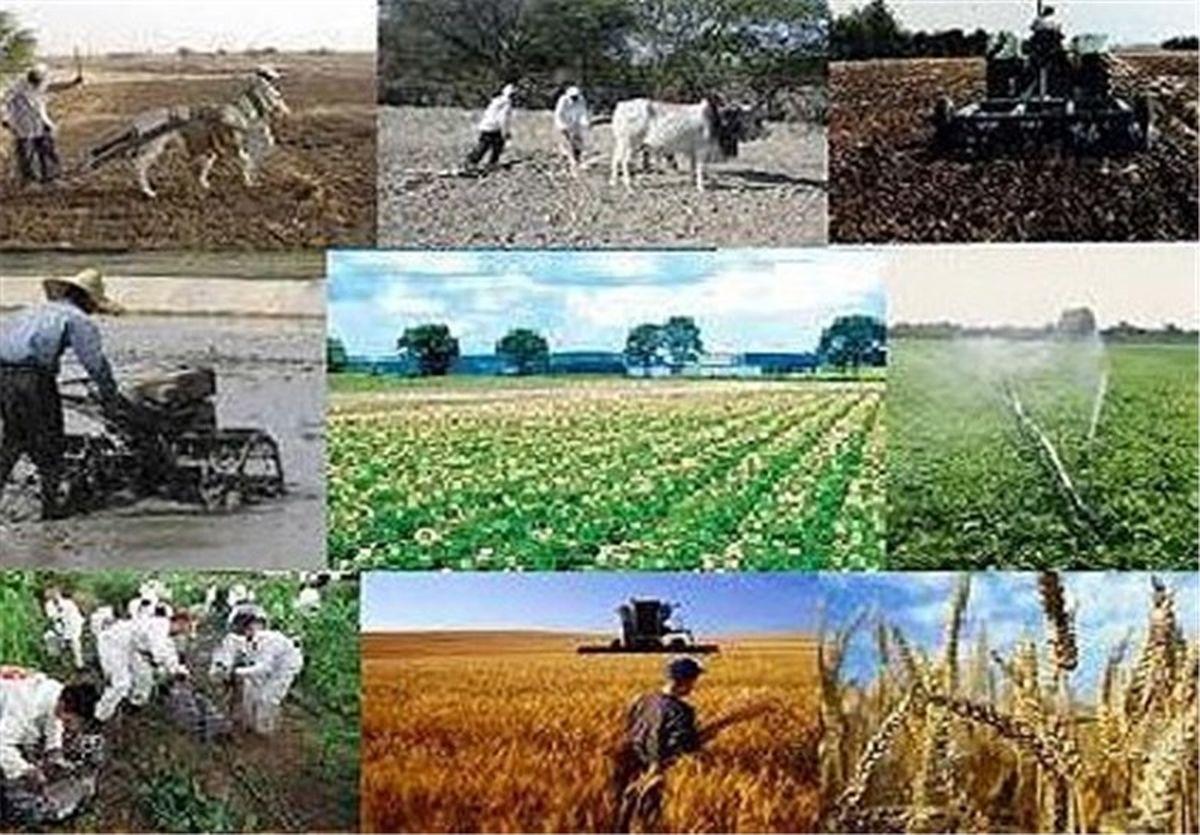 قیمت خرید تضمینی ۴۷ محصول کشاورزی برای سال زراعی آینده اعلام شد