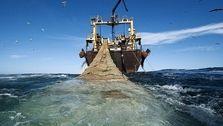 ۶۰ درصد آبزیان دریاهای جنوب کشور با صید غیرمجاز ترال از بین رفته اند / نسلهای آینده تنها نامی از ماهی خواهند شنید