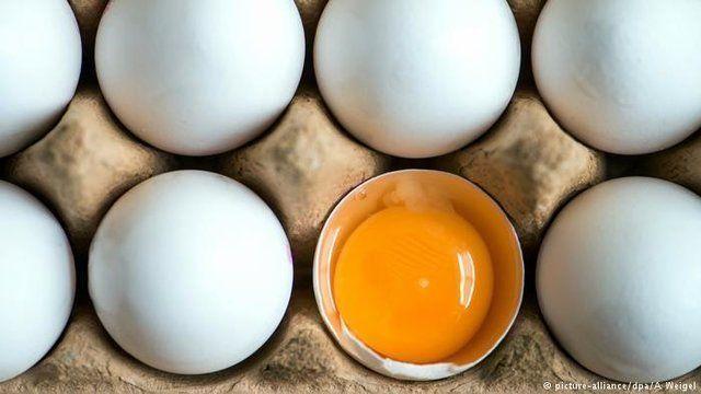 تخم مرغ بسته بندی شانه ای ٣١ هزار تومان!