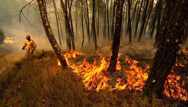 تخصیص ۱۵ میلیارد تومان برای اطفاء حریق جنگلها